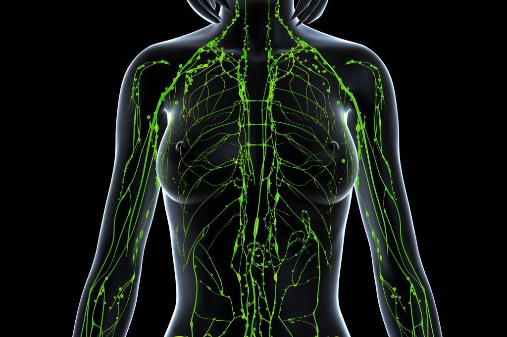 lymphatics body